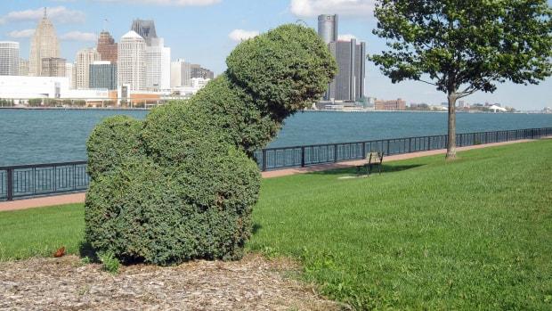 dong bush